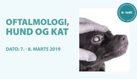 Oftalmologi, hund og kat