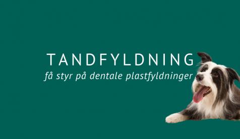 Tandfyldning – få styr på dentale plastfyldninger